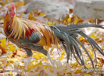 بالصور صور حيوانات وطيور روعه روعة