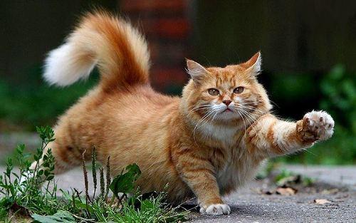 بالصور تفسير حلم قتل القط او ذبح القطة في المنام 20160723 632