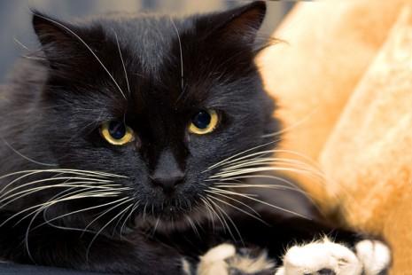 بالصور تفسير حلم قتل القط او ذبح القطة في المنام 20160723 633