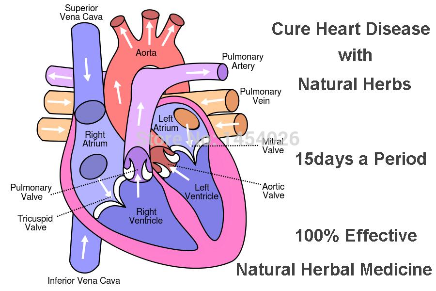 بالصور علاج امراض القلب بالاعشاب الطبيعية 20160723 695