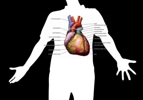 بالصور علاج امراض القلب بالاعشاب الطبيعية 20160723 696