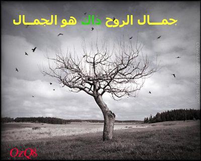 صوره كلمات عن جمال الروح