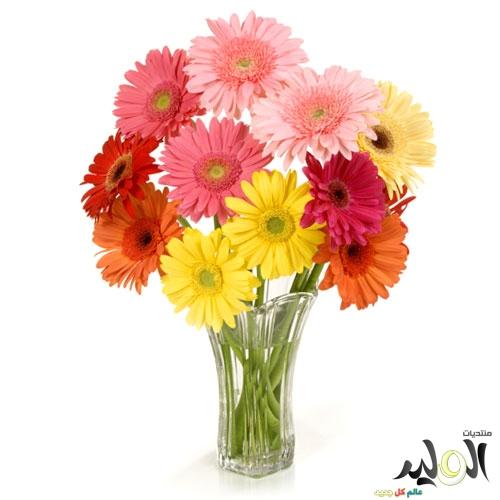 بالصور صور زهور وباقات ورد جميلة 20160724 687