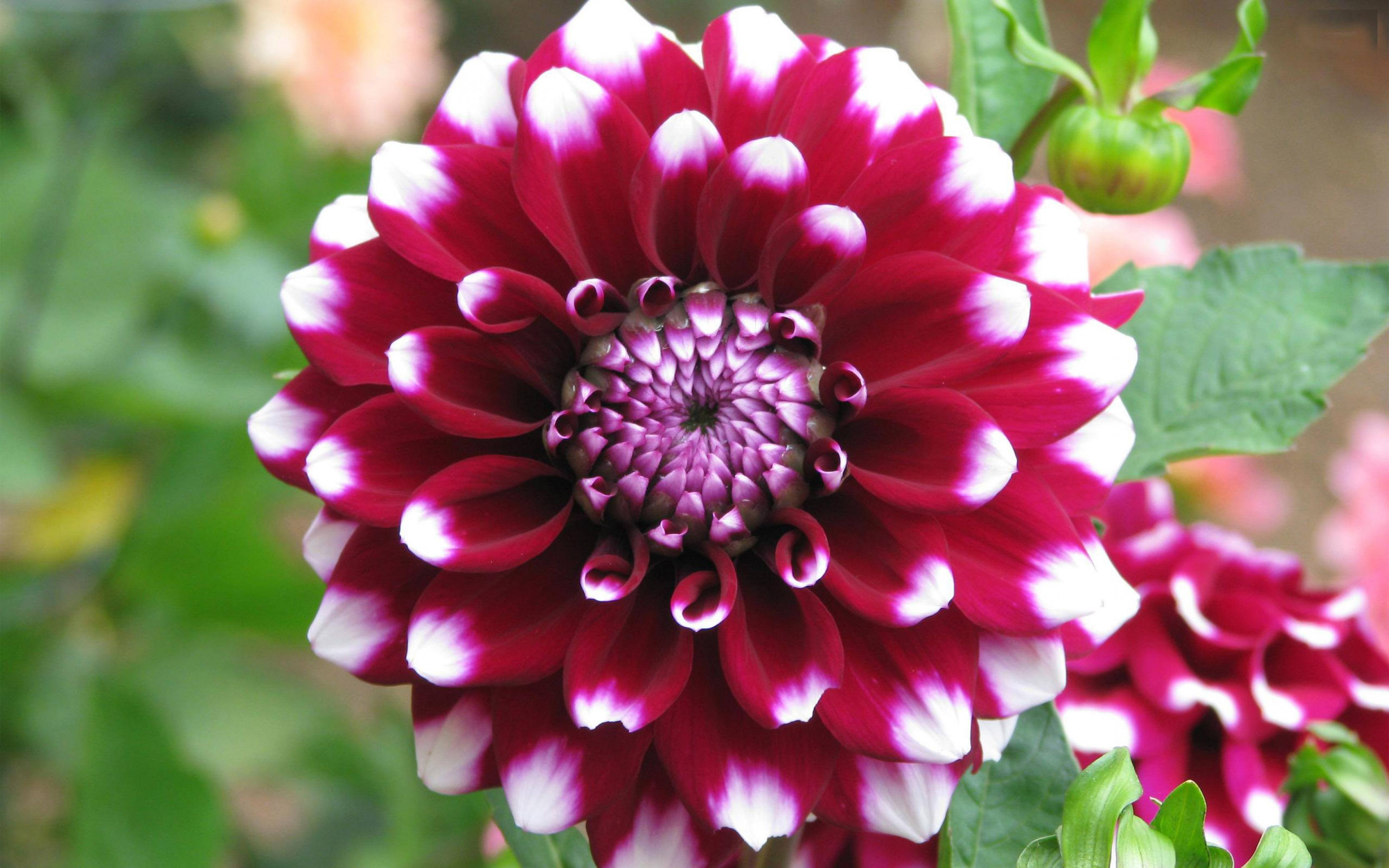 بالصور صور زهور وباقات ورد جميلة 20160724 688