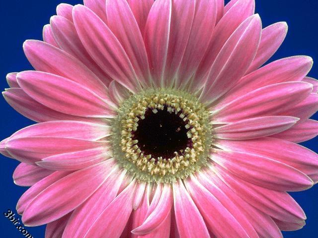 بالصور صور زهور وباقات ورد جميلة 20160724 695