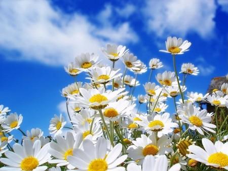 بالصور صور زهور وباقات ورد جميلة 20160724 696