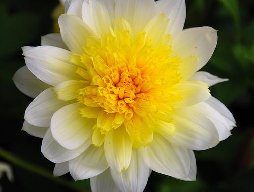 بالصور صور زهور وباقات ورد جميلة 20160724 697