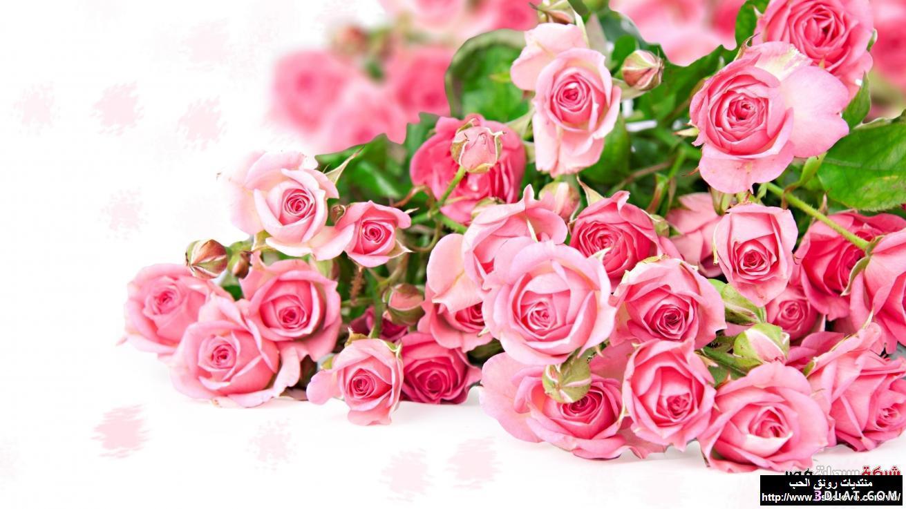 بالصور خلفية ورود وصو زهور جميلة 20160725 45