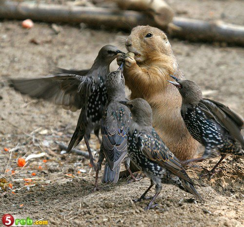 بالصور من عجائب وغرائب الحيوانات 6218 01284561896
