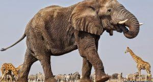 صورة تفسير حلم الهروب من الفيل