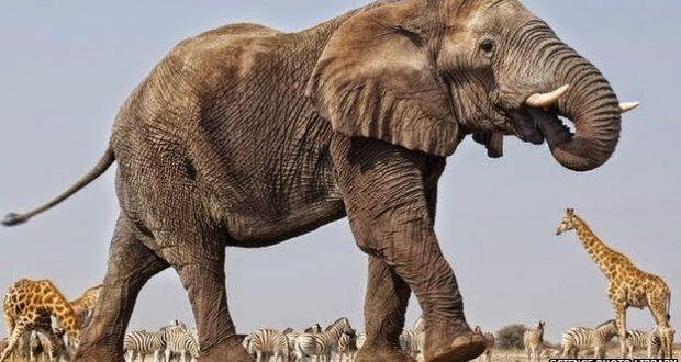 تفسير حلم الهروب من الفيل