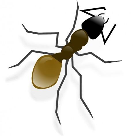 صور تفسير حلم النمل للحامل