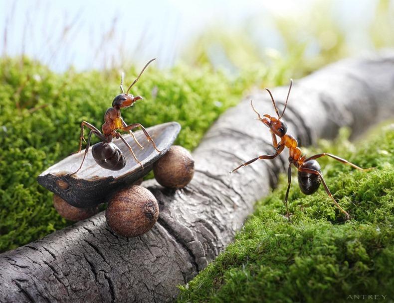 صوره غرائب وعجائب النمل العجيبة