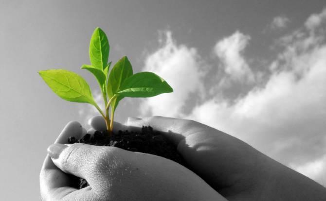بالصور امثال و حكم من زرع حصد greengrowth2