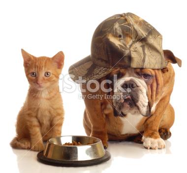 صوره ما هو اكل القطط الشيرازي