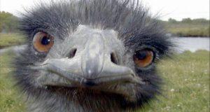 صوره ماهو الطائر الذي اذا فقد عينه نام