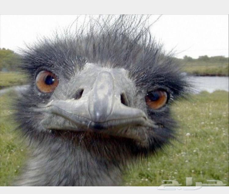 بالصور ماهو الطائر الذي اذا فقد عينه نام j9D972FeFAcacC