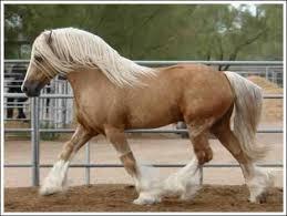 صوره انواع الخيول بالصور نوع الخيل من كل الدول اسماء ومعلومات
